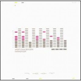 Harmonizer [CD]