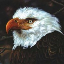 Hawk Is Howling [CD]