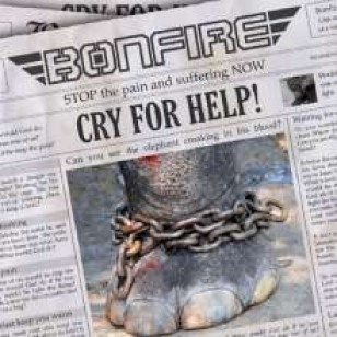 Cry For Help! EP [CD]