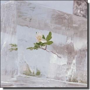 Windflowers [CD]