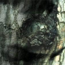 La Valse des Monstres [CD]