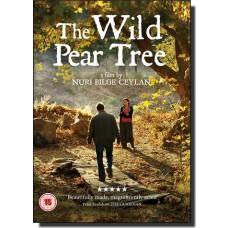 The Wild Pear Tree | Ahlat Agaci [DVD]